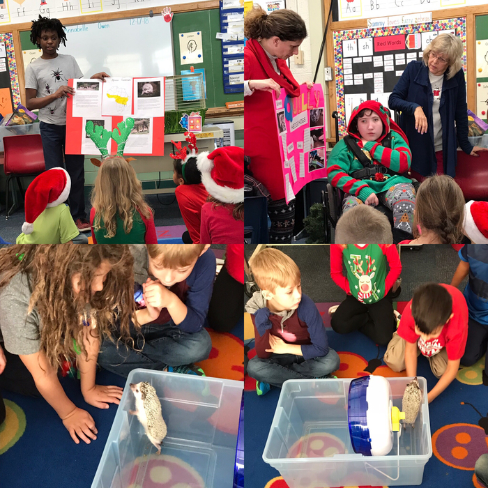Mrs. Kalter's students have been caring for an African Pygmy Hedgehog and shared the project with first graders.
